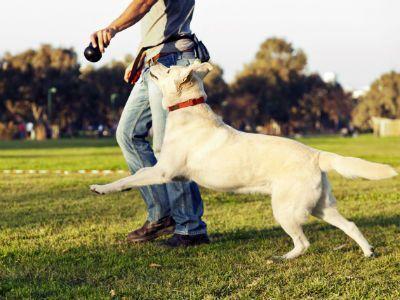 hacer-planes-con-mi-perro-paseoyjuego
